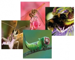 Insect greeting cards (pack of four cards)